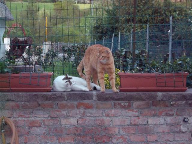 Che fatica essere gatti