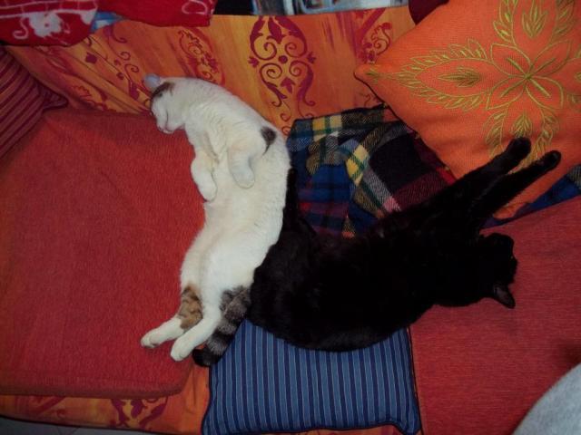 Solo dei felini possono dormire così