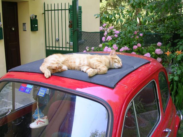 Dura vita da gatto