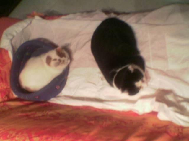 Pepe e Silvestro 1