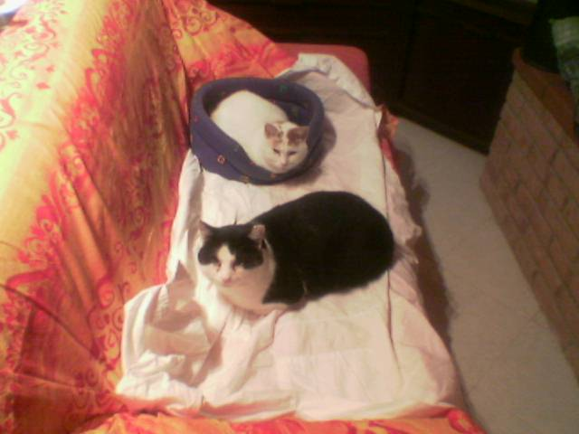Pepe e Silvestro 2